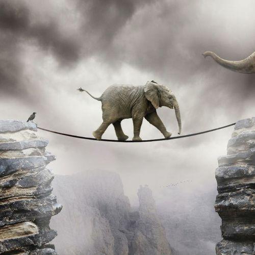 elephanttightrope